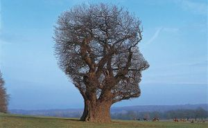 Pink Floyd - Tree Of Half Life. Cover art by Storm Thorgerson