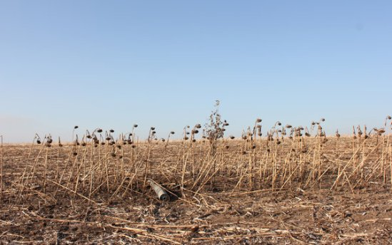 A rocket with an intact payload of cluster munitions lies in a field in Novomikhailova, Ukraine.Credit Andrew Roth/The New York Times