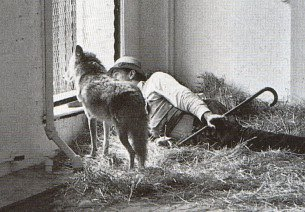 Joseph Beuys and a coyote - New York 1974